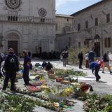 Assisireise-Blumenteppich-Mai