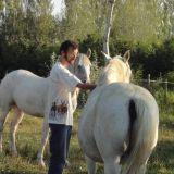 6a-Camargue-Mas-Pferde1